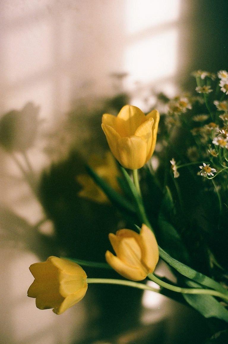 Suppose Studios graphic design & photography flowers film photographer